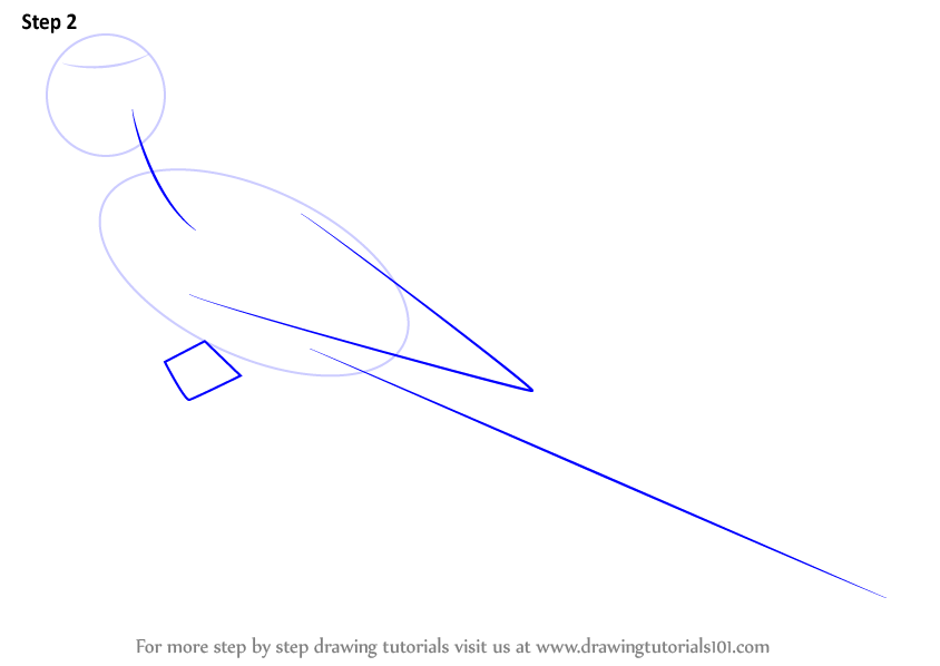 macaw drawing step by step - photo #11