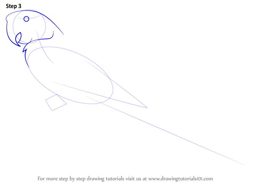 how to draw a macaw