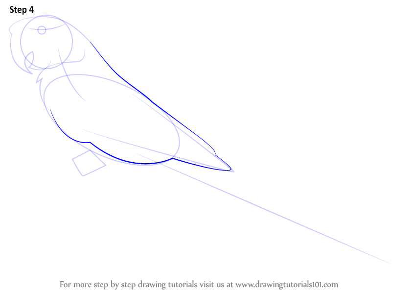 how to draw a parrot step by step video