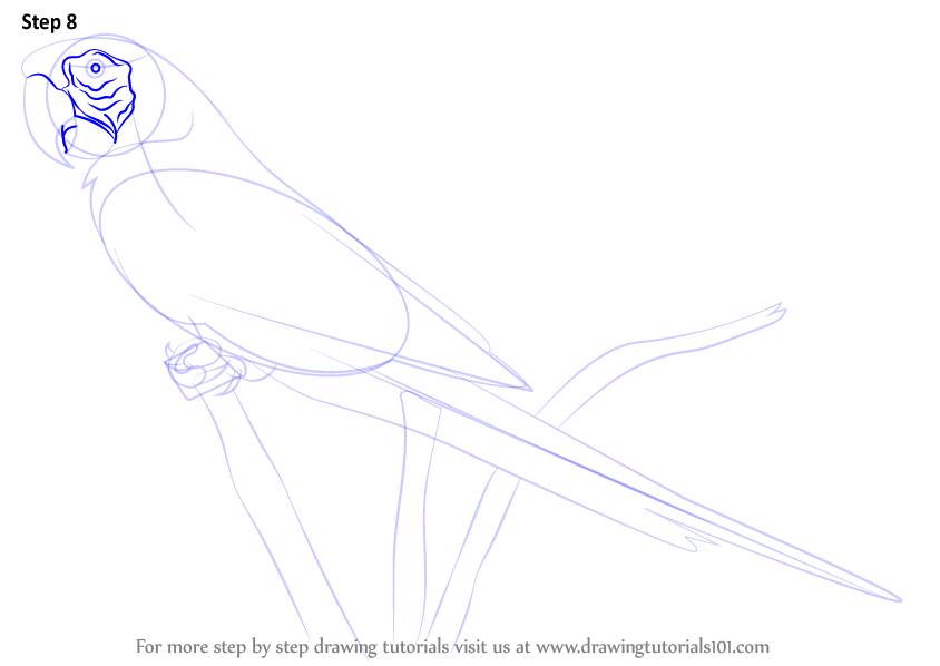 macaw drawing step by step - photo #3