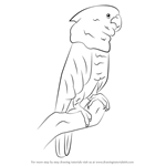 How to Draw a Umbrella Cockatoo