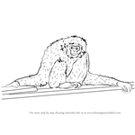 How to Draw a Gibbon