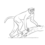 How to Draw a Rhesus Macaque