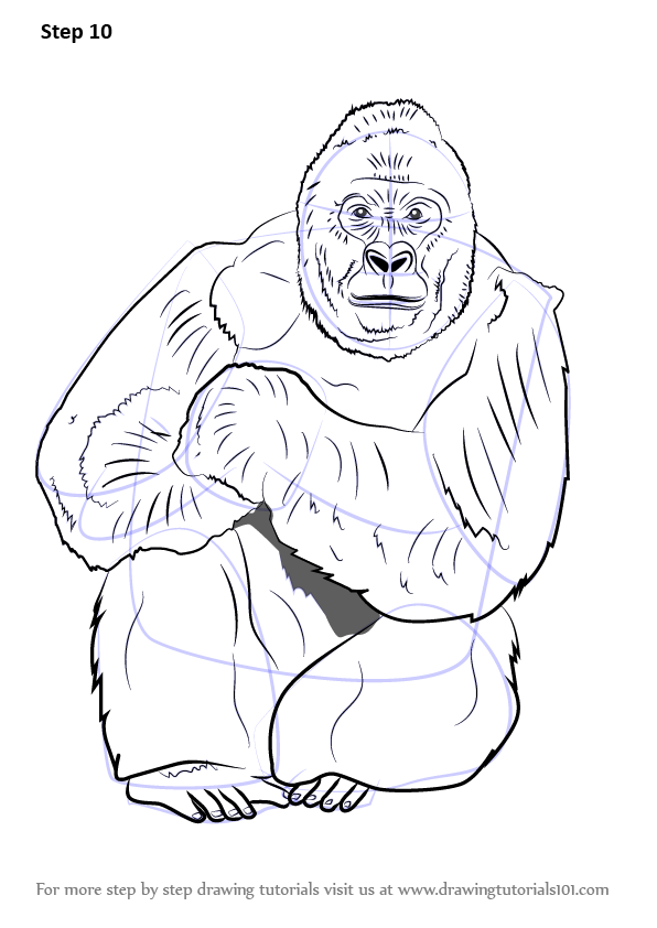 Learn How to Draw a Western Lowland Gorilla Primates