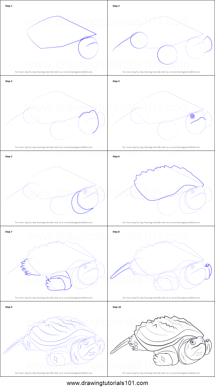 Uncategorized How To Draw Turtles Step By Step how to draw an alligator snapping turtle printable step by drawing sheet drawingtutorials101 com