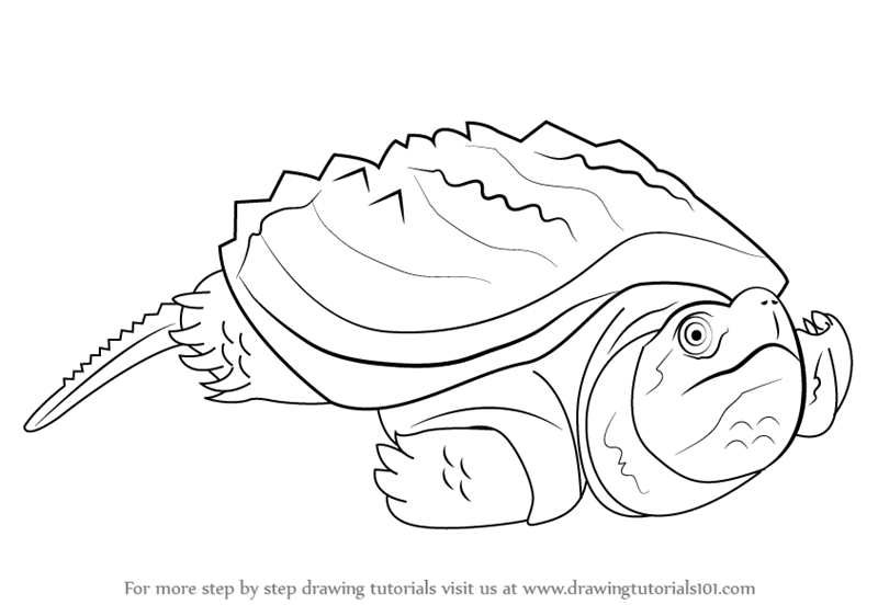Learn How to Draw an Alligator Snapping Turtle Reptiles Step by