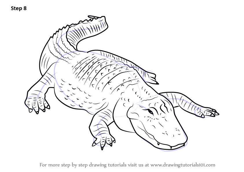 Learn How to Draw an American alligator