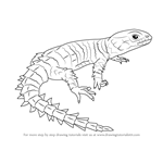 How to Draw an Armadillo Girdled Lizard