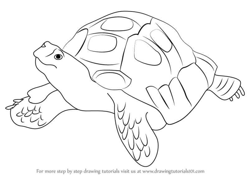 Tortoise Silhouette  Free vector silhouettes