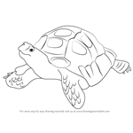 How to Draw an Asian Forest Tortoise