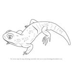 How to Draw a Barking Gecko