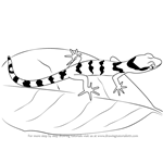 How to Draw a Bent-Toed Gecko