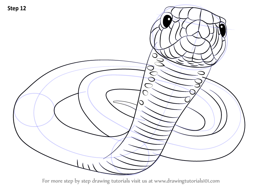 Learn How to Draw a Black Mamba