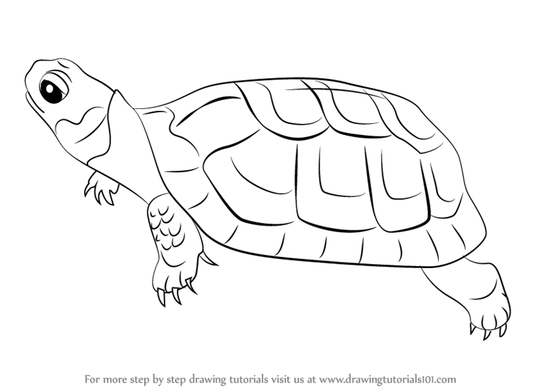 turtles how to draw triangle
