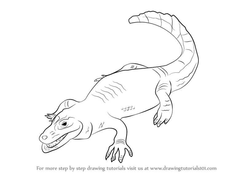 Learn How To Draw A Caiman Reptiles Step By Step