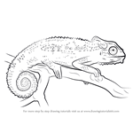 How to Draw a Cape dwarf chameleon