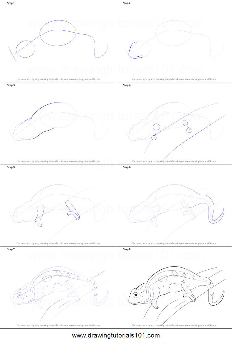 photograph regarding Chameleon Printable titled How in direction of Attract a Chameleon printable stage through phase drawing sheet