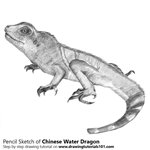 How to Draw a Chinese water dragon