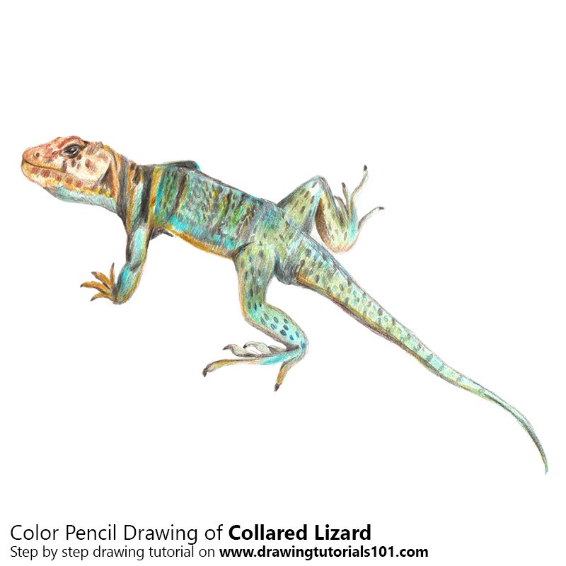 collared lizard coloring pages - photo#46