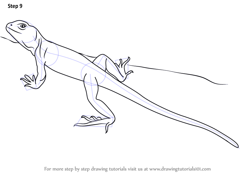 step by step how to draw a collared lizard