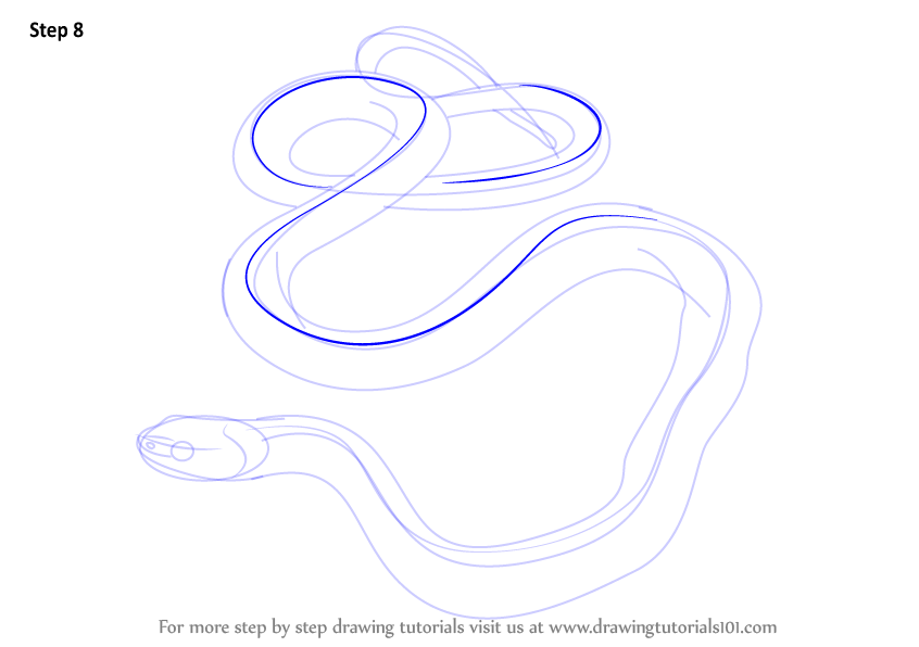 how to draw a snake step by step with pictures
