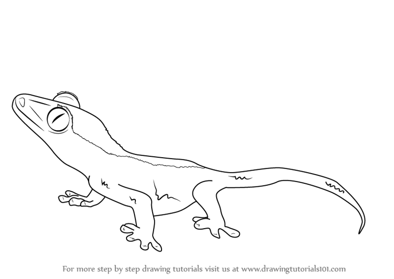 Learn How To Draw A Crested Gecko Reptiles Step By Step Drawing