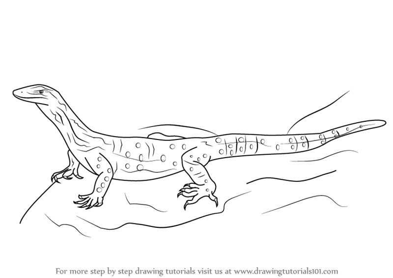 Learn How To Draw A Goanna Reptiles Step By Step Drawing Tutorials