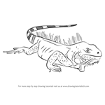 How to Draw Iguana Lizard