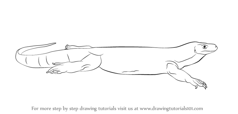 Learn How To Draw A Komodo Dragon Reptiles Step By Step Drawing