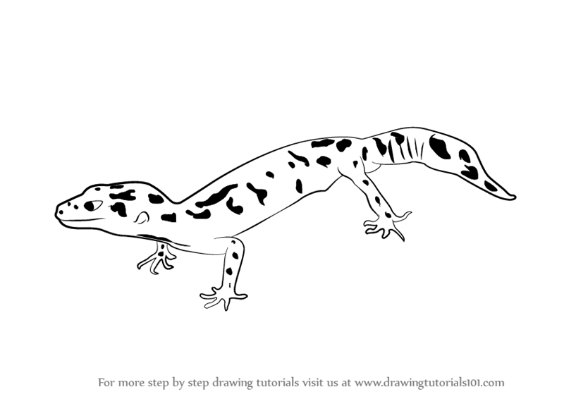 Drawing Snakes and Lizards How to Draw Reptiles For the