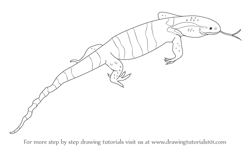 learn how to draw a monitor lizard reptiles step by step drawing tutorials