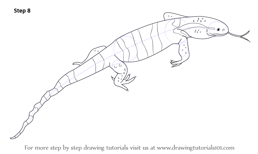 Line Drawing Lizard : Learn how to draw a monitor lizard reptiles step by