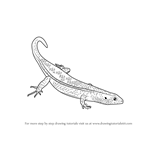 How to Draw an Ocellated Skink