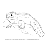 How to Draw a Tuatara