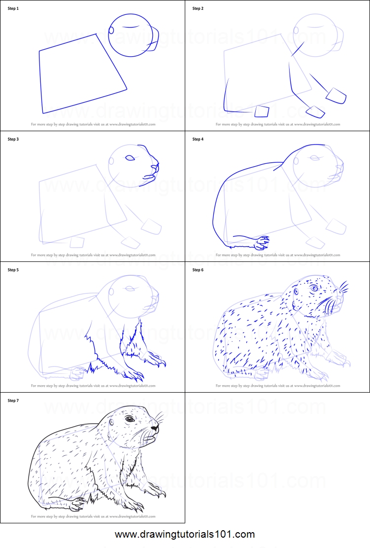 How To Draw A Baby Prairie Dog Printable Step By Step Drawing Sheet