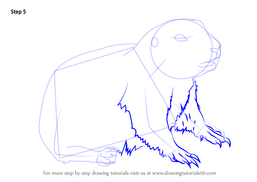 Learn How To Draw A Baby Prairie Dog Rodents Step By Step