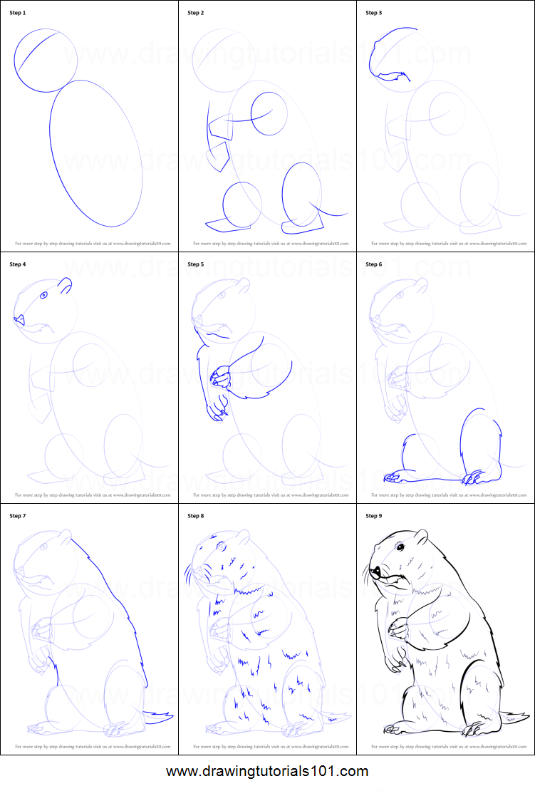 how to draw a groundhog step by step easy