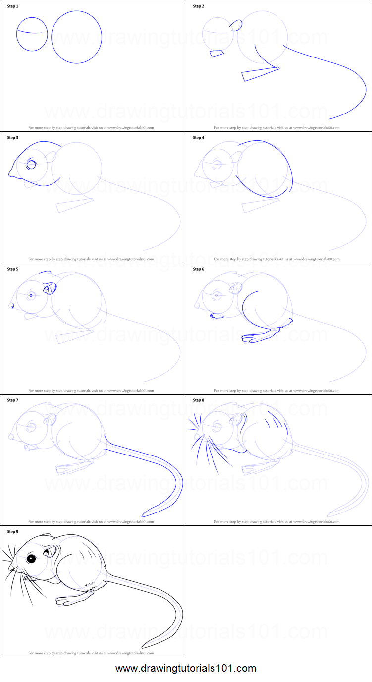 Uncategorized How To Draw Rats how to draw a kangaroo rat printable step by drawing sheet drawingtutorials101 com