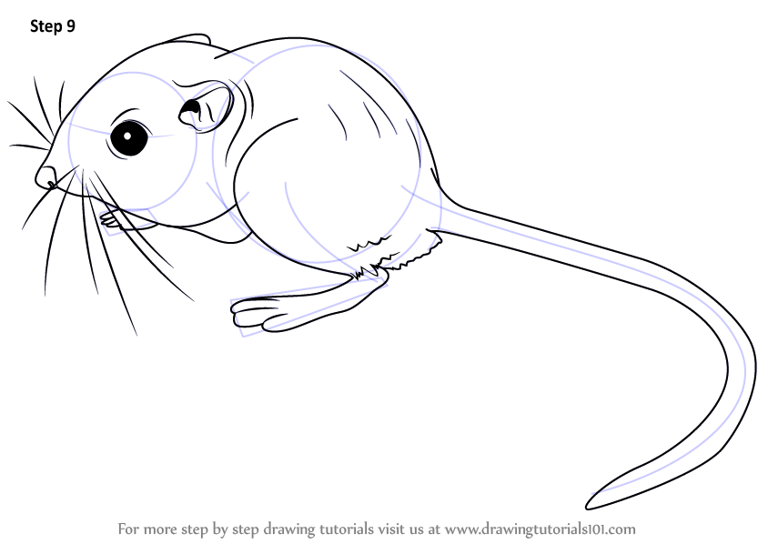 Cute kangaroo rat drawing for How to draw with a mouse