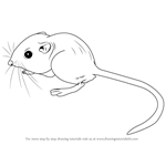 How to Draw a Kangaroo Rat