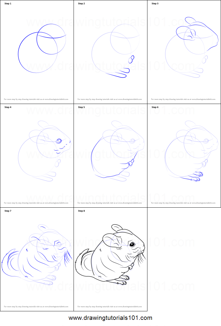 how to draw a long tailed chinchilla printable step by step drawing sheet drawingtutorials101com