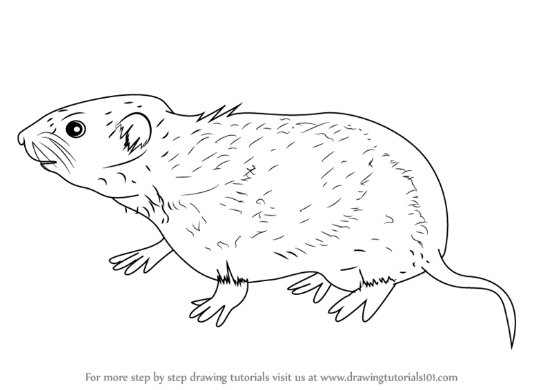 meadow animals coloring pages - photo#46