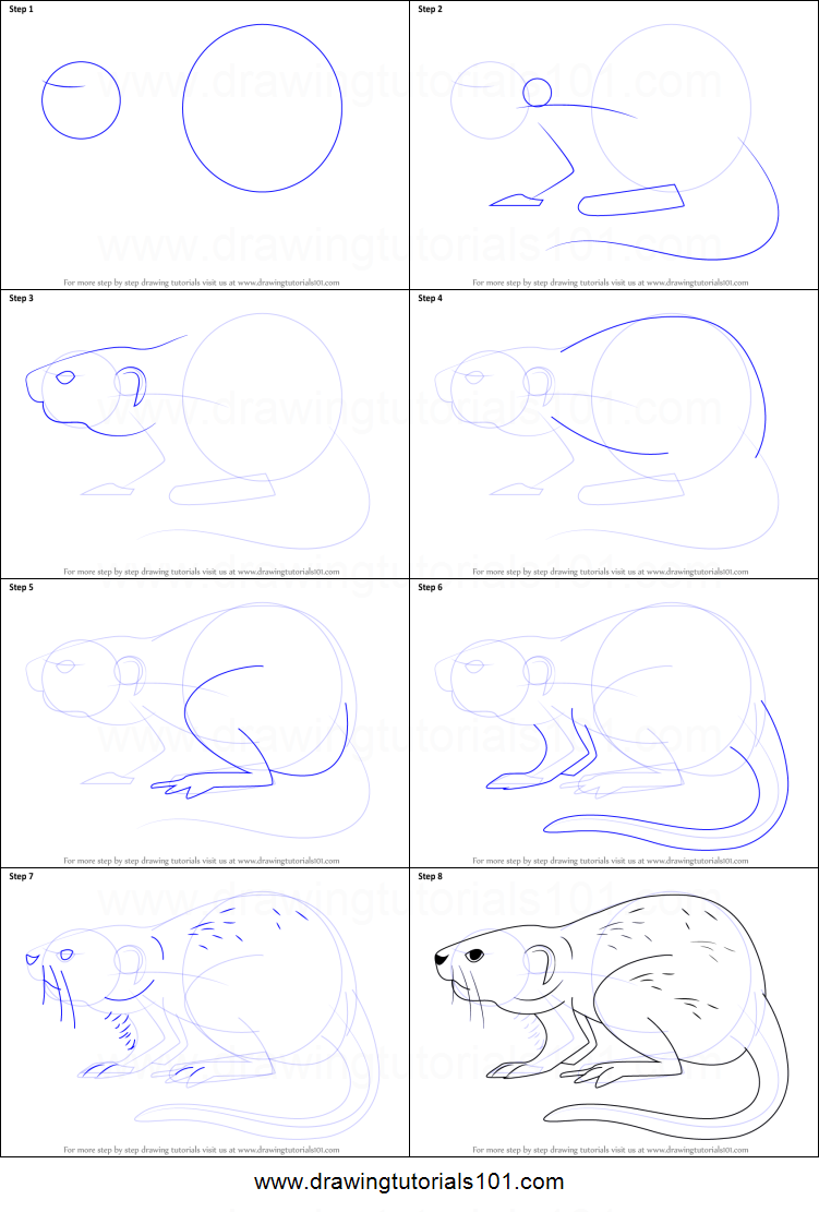 How to draw a muskrat printable step by step drawing sheet for How to make doodle art