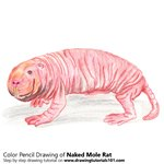 naked mole rat coloring pages - photo#10