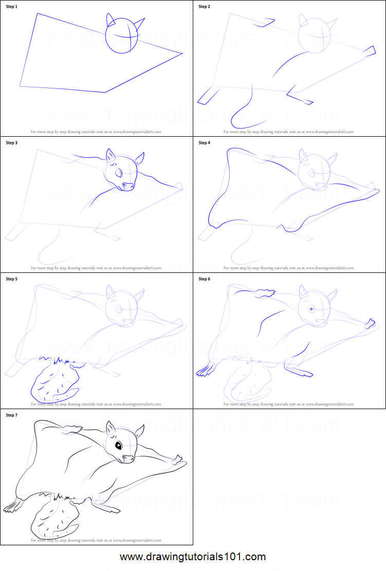 How to Draw a Northern Flying Squirrel printable step by step