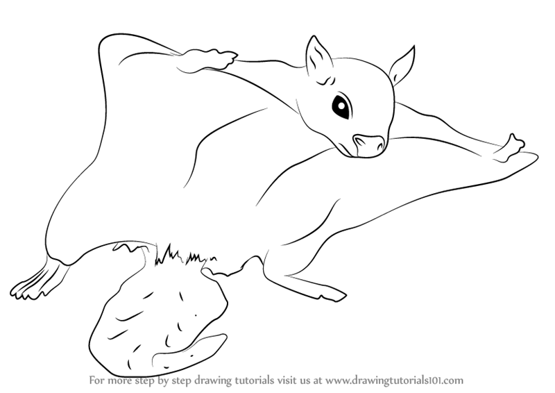 Learn How to Draw a Northern Flying Squirrel Rodents Step by