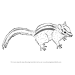 How to Draw a Panamint Chipmunk