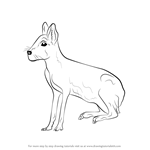 How to Draw a Patagonian Mara