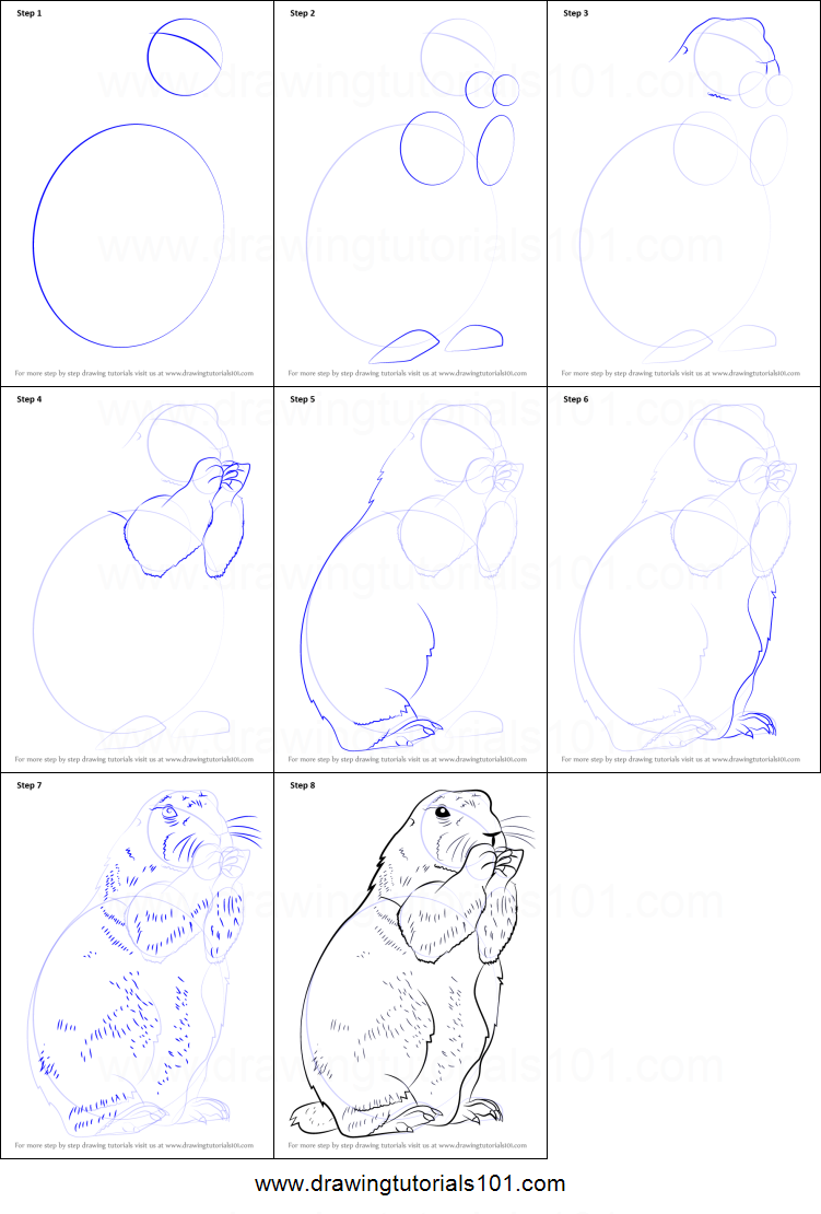 How To Draw A Prairie Dog Printable Step By Step Drawing Sheet