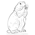 How to Draw a Prairie Dog